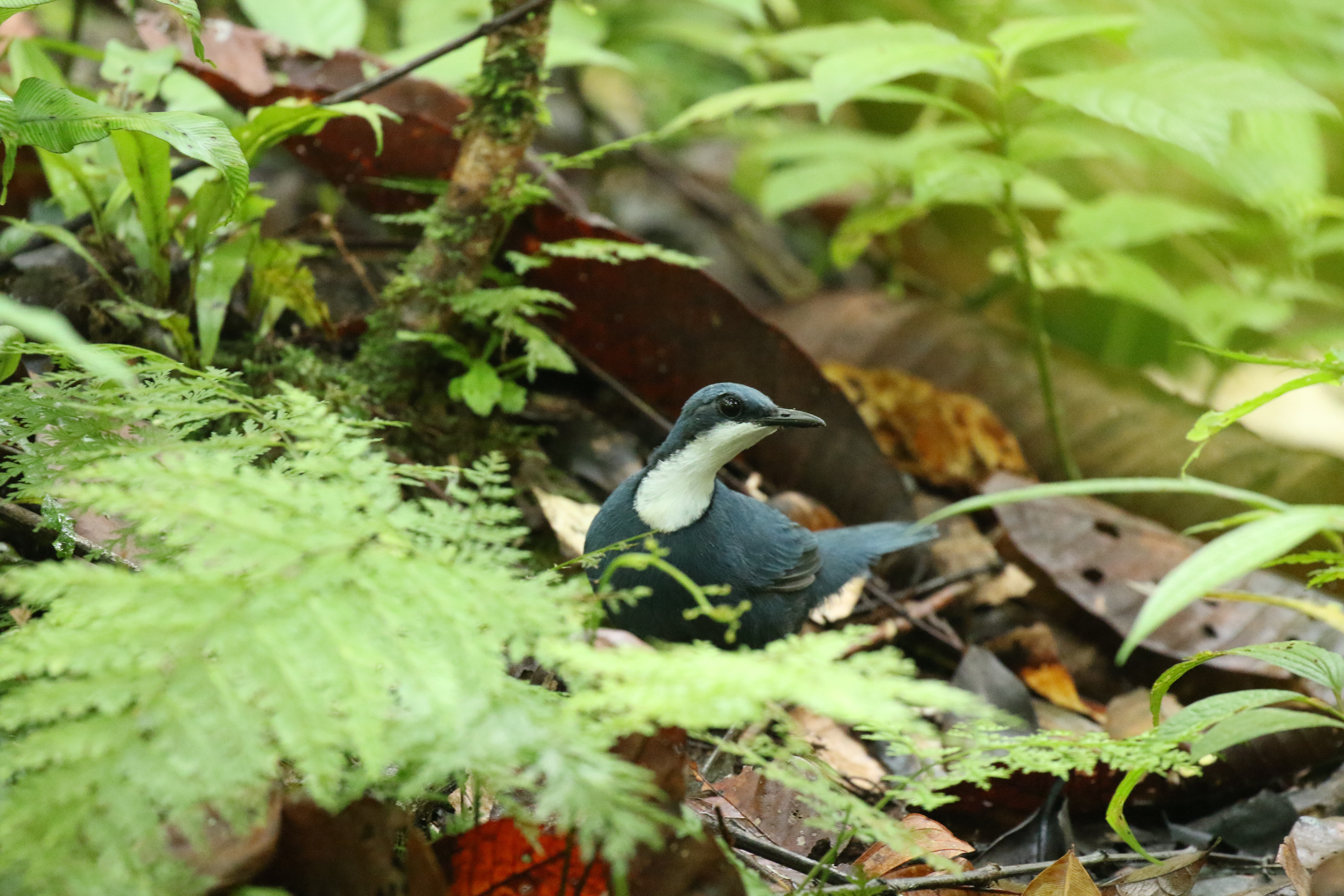 Photo report: bird-of-paradise tour to West Papua in 2017